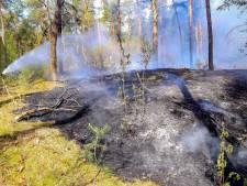 Bosbrand aan Rijntjesdijk Vlierden, vermoeden van brandstichting