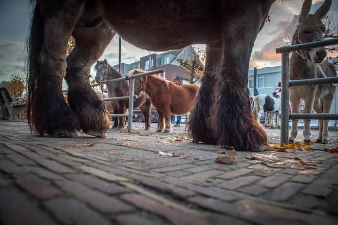 Evenementen zoals de Leste Mert in Druten kunnen weer bij de gemeente Druten aankloppen.