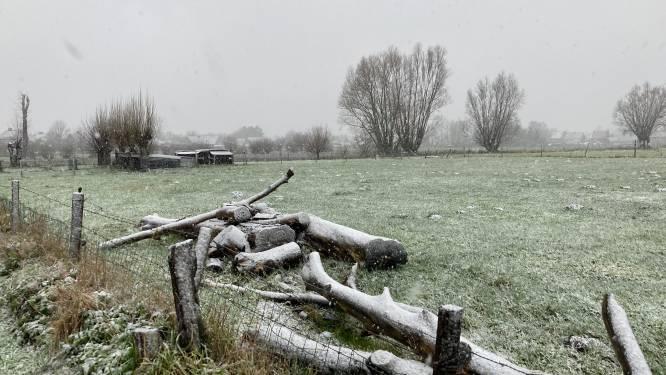 Daar is de sneeuw! Torhout bedekt onder laag(je) sneeuw