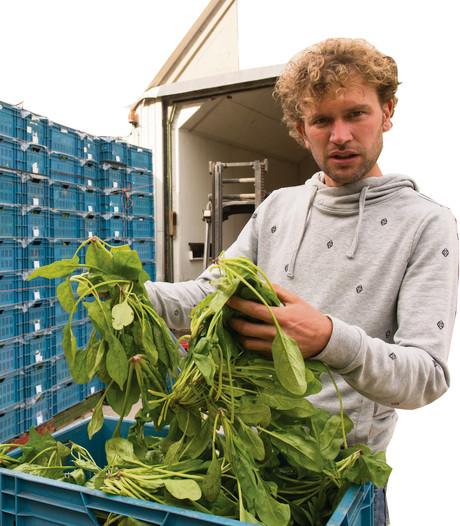 Gratis afgekeurde spinazie uit Ens in twee uurtjes weg
