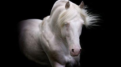 Kunstenaressen brengen ode aan het paard in Koetshuis