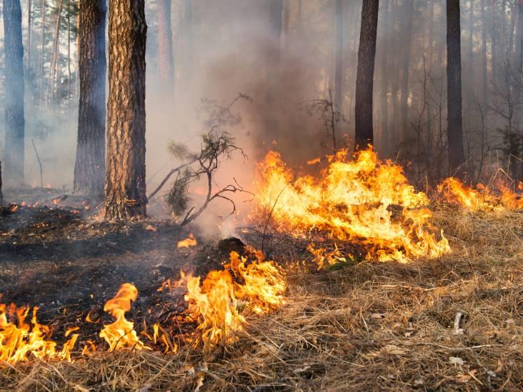 Bosbrand in omgeving Bladel: vuur niet onder controle