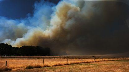 Twee Nederlandse campings ontruimd door grote natuurbrand