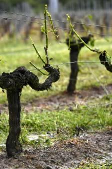 Noodweer vernielt Franse wijnvelden: ook in Nederland mogelijk grote hagelstenen