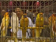Vakantietips: Van een paaseierenbeurs tot het WK baanwielrennen