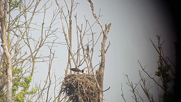 Het nest vorig jaar.