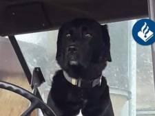 Hond van bejaarde vrouw doodgereden in Haaksbergen: bestuurder rijdt door