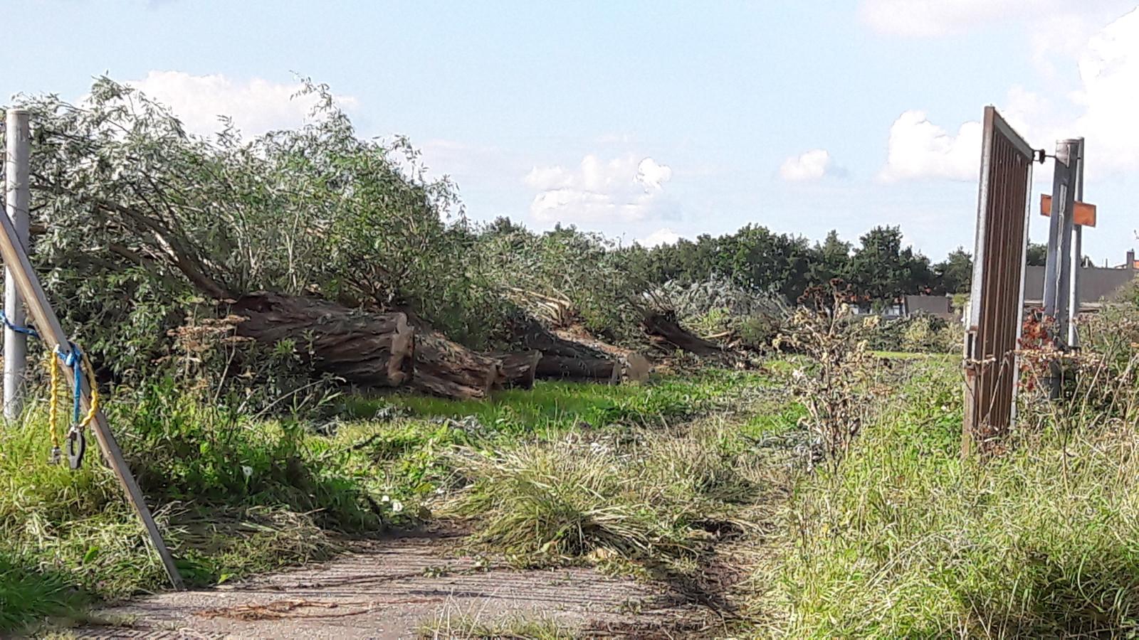 De gekapte bomen op Nudepark 2