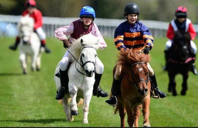 Een archiefbeeld van een Shetland Pony Race op Lansdown Hill, in Engeland.