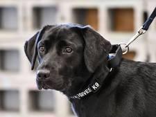 Explosievenhond in opleiding eervol ontslagen door CIA