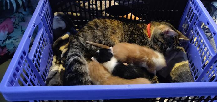 Een moeder en kittens werden gisteren gered, nadat de motor van het jacht waarop zij zich bevonden het begaf.