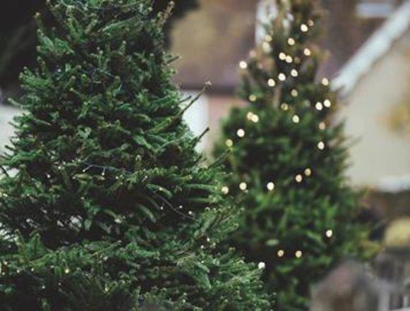 Kerstbomen.