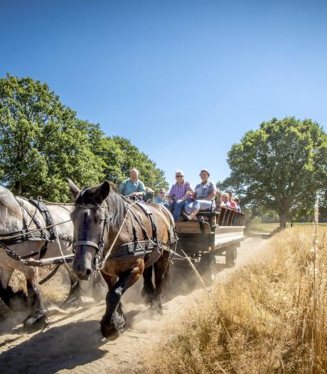 Koetsier Hennie rijdt met paard en wagen door het Springendal