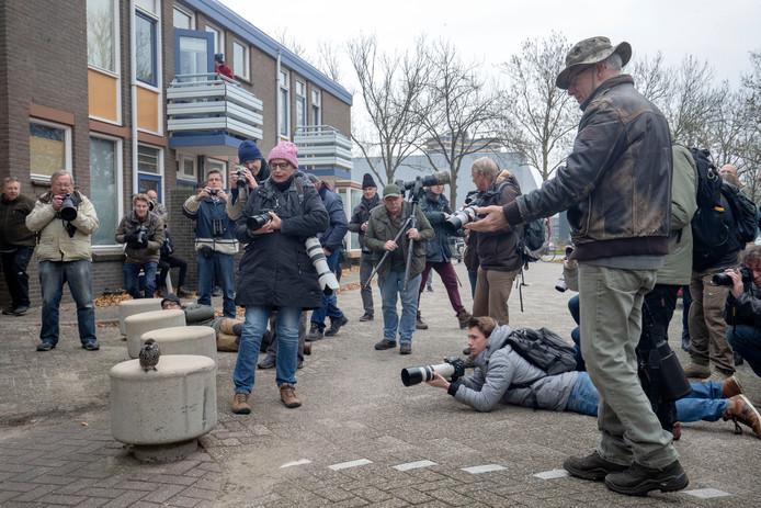 Vogelaars kwamen eind 2018 massaal naar Wageningen om de zeer zeldzame notenkraker te zien.