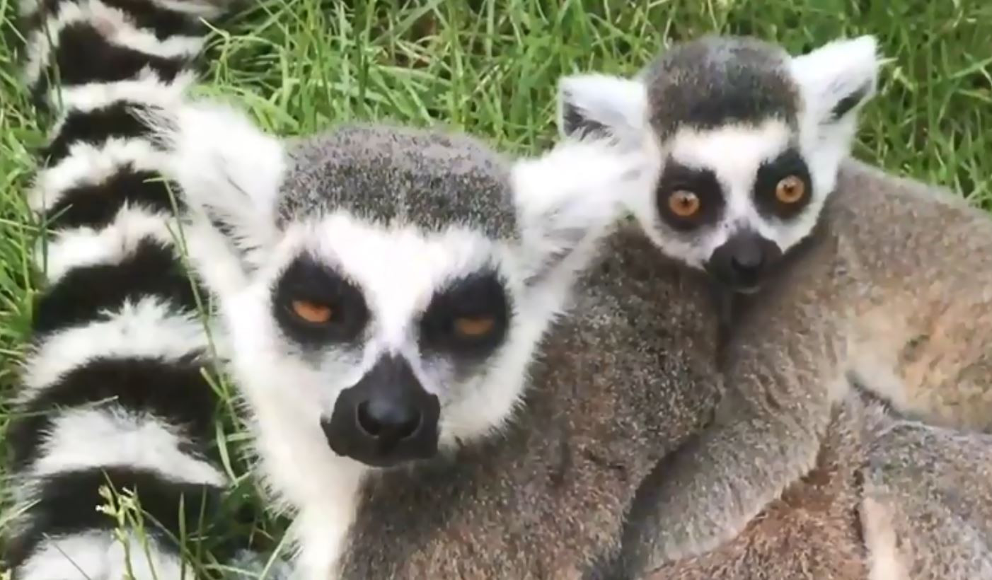 Er is een petitie gestart voor het behoud van Diergaarde Blijdorp in Rotterdam. De dierentuin verkeert door de coronacrisis is financieel in zwaar weer.
