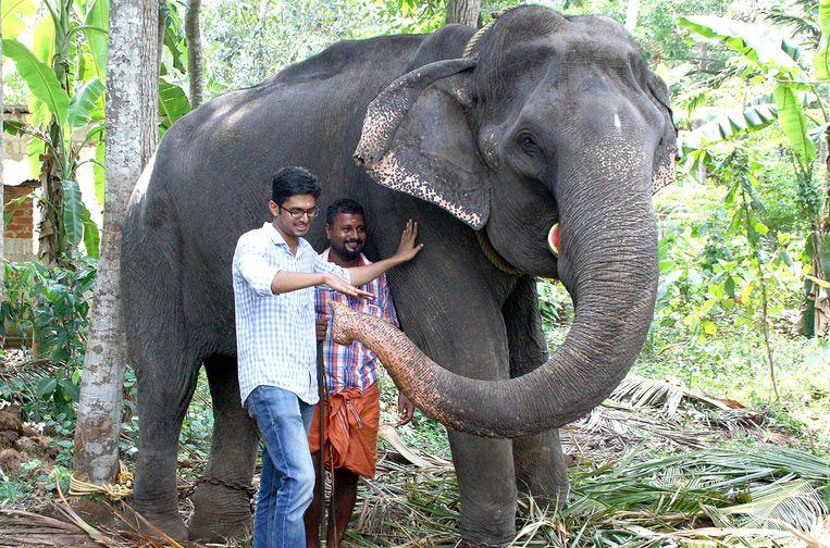 Dakshayani was een zogenoemde tempelolifant en nam deel aan rituelen en processies. Beeld AFP
