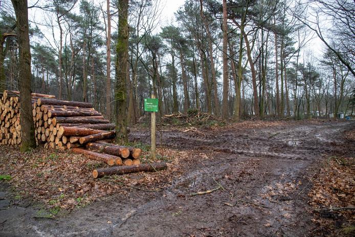 Bewoners in de omgeving van het Edese Bos zijn niet blij met de houtkap die momenteel plaats vindt.
