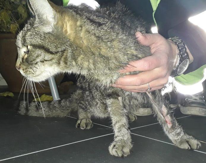 Mika raakte gewond aan zijn pootje, in de zes weken dat hij spoorloos was.