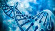 Onderzoekers van KU Leuven brengen blinde vlek in DNA in kaart