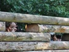 Wildobservatieplek bij Hoog Buurlo heeft nog ruim 1500 euro nodig