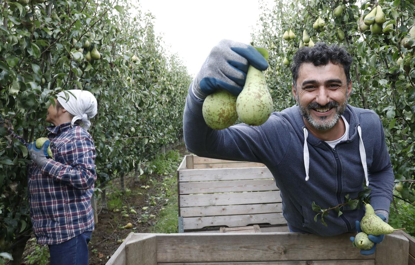 Monzer Mutrahje was econoom in Syrië, maar krijgt groene vingers in de Betuwe.