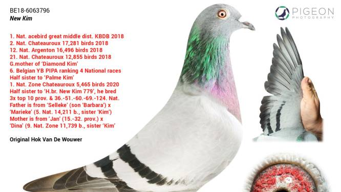 Het leven van de duurste duif ooit: privébewaking en nooit meer buiten vliegen