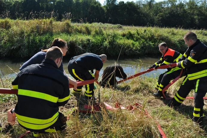 De brandweer haalde het dier uit de sloot met behulp van brandweerslangen.