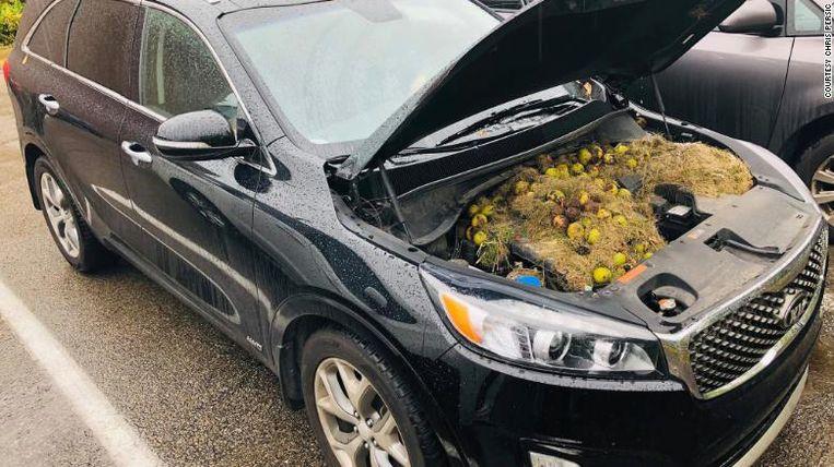 De walnoten zaten zowat overal in de motor verstopt.