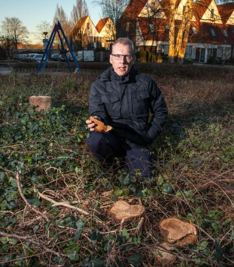 Kaalslag in Westenholte: gemeente Zwolle blundert met bomenkap