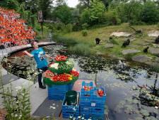 Apenheul zendt voedering gorilla's live uit nu dierenpark dicht blijft