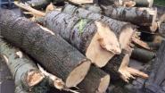 Gemeente verkoopt lot hout van gevelde witte abelen
