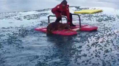 Hond gered uit koud water nadat hij door ijs van vijver was gezakt