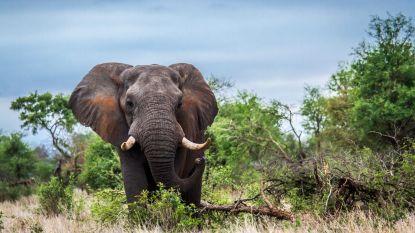 Namibië verkoopt 1.000 wilde dieren uit nationale parken door extreme droogte