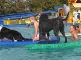 Woef! Zwemmen met je hond, wie wil dat nou niet?