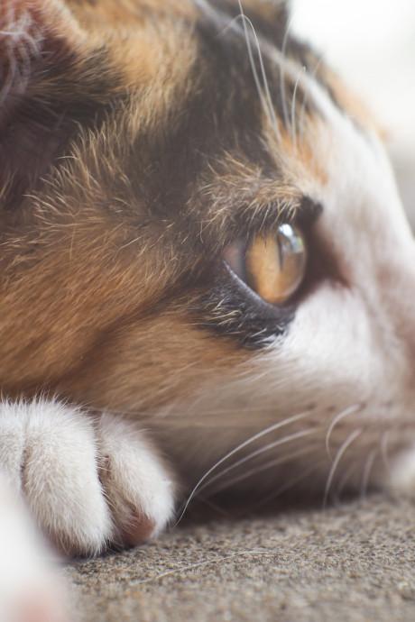 'Help de achtergelaten katten van Fort Oranje, laat ze niet bevriezen!'