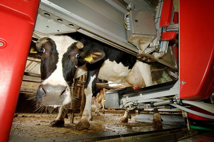En koe in een moderne melkmachine