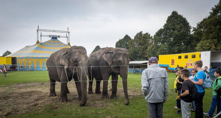 Olifanten bij Circus Renz Berlin. Beeld anp