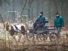Dankzij haar pony doet Ingrid veel voor Osse bossen