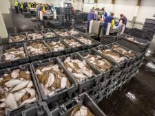 Fransen blijven Nederlandse vissers dwarszitten: nu protest tegen 'Kärcher-visserij'