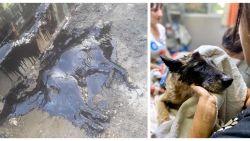Kinderen treffen hond volledig bedekt met teer aan, als bij wonder kunnen dierenvrienden haar nog redden