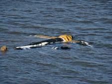 Drijvend lichaam in hoogwater bleek een vogelverschrikker