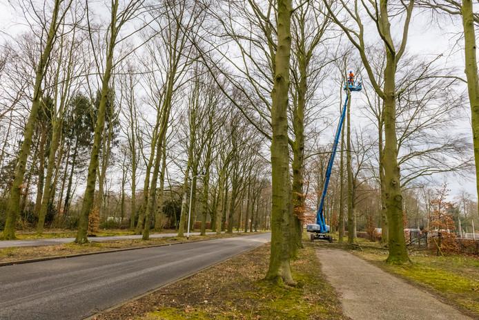Inwoners van de gemeente Raalte die het niet eens zijn met het kappen van een boom of bomen (en het rooien van een struik of struiken), kunnen dat kenbaar maken op het Meldpunt Bomen op de website van GroenLinks Raalte.