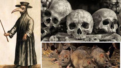 Studie brengt verspreiding Zwarte Dood in kaart en besluit dat niet ratten achter 50 miljoen doden zaten maar dat we het aan onszelf te wijten hebben