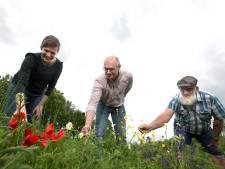 Duiven gaat voor bloeiend landschap met veel inheemse planten