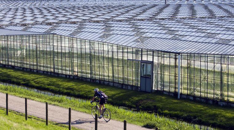 Een wielrennner rijdt langs de kassen in het Westland bij 's-Gravenzande. Beeld ANP
