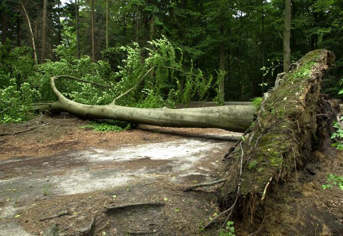 Bij andere stormen is er ook al schade aangericht in de West-Brabantse bossen, zoals hier in het Mastbos bij Breda.