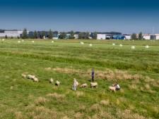 Tapijtreus Vébé kan verder met uitbreidingsplannen in Genemuiden