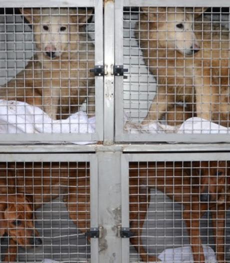 Justitie: drie maanden cel voorwaardelijk voor hondenfokker uit Lettele én taakstraf