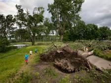 Lessen trekken uit de storm: 'Zwarte maar intrigerende dag voor het groen in Eindhoven'