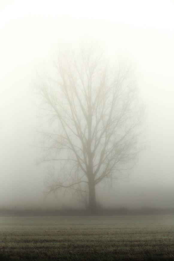 Mist in Limburg  Alken